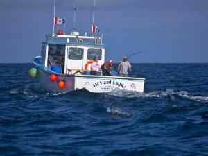 bluefin-tuna-02